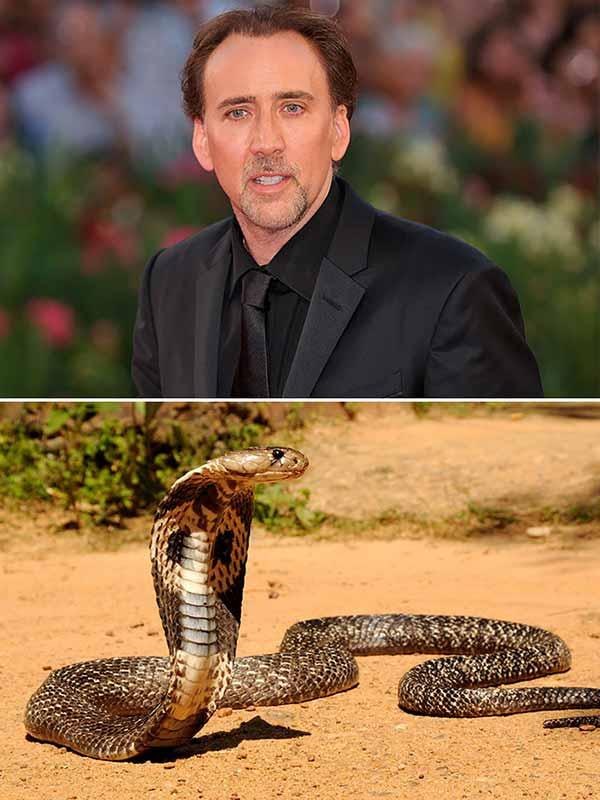 Николас Кейдж и кобра