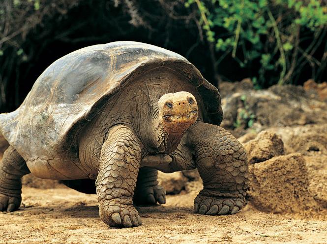 животные звезд черепаха Ди Каприо