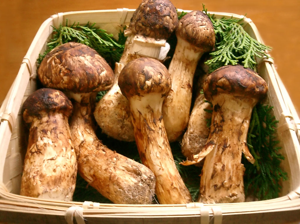 продукты - мацутаке