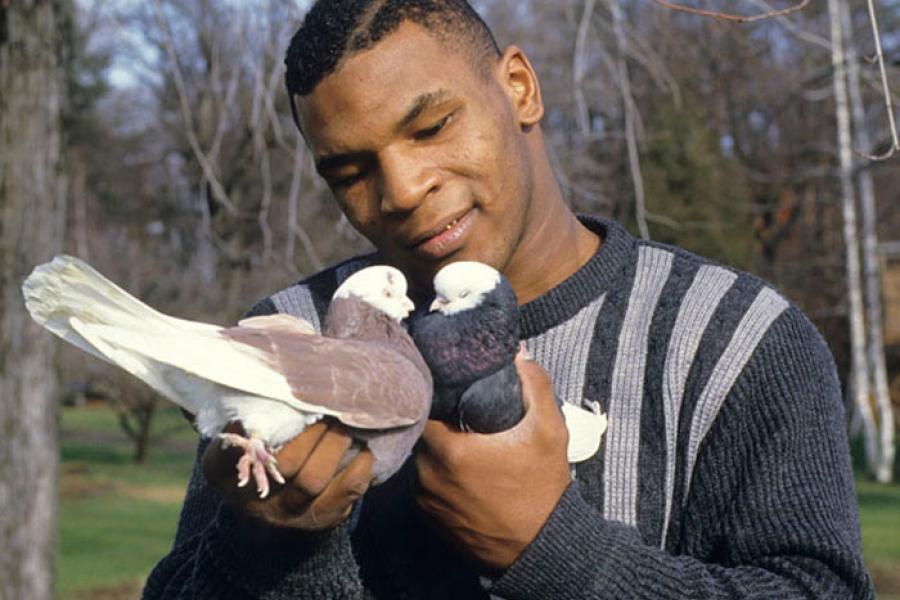 животные звезд - тайсон и голуби